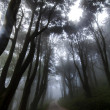 Eerie road in a forest with fog and rain — Photo #60464189
