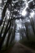 Eerie road in a forest with fog and rain — Stock Photo