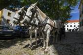Double horse carriage — Stock Photo