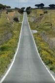 Straight long asphalt road in Alentejo — Stock Photo