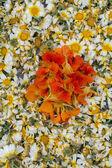 Traditionele religieuze processie van de fakkels van de bloem — Stockfoto