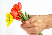Hands presents a bouquet of red and yellow tulips on white background — Stock Photo