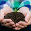 Sprout with soil in male hands — Stock Photo #73172463