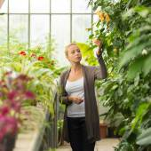 Florists woman working in greenhouse. — Stock Photo