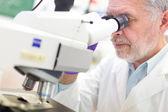 Senior scientist  microscoping in lab. — Stock Photo