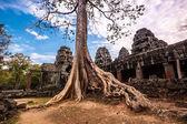 Tree in Ta Phrom, Angkor Wat, Cambodia. — Stock Photo