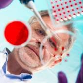 Senior life science researcher grafting bacteria. — Stock Photo