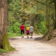 Family walking in the woods — Stock Photo #58811933