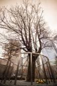 Überlebender Baum, Manhattan, New York. — Stockfoto