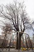 Survivor Tree, Manhattan, New York. — Stock Photo