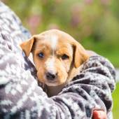 Mixed-breed cute little puppy in lap. — Foto de Stock
