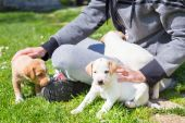 Mixed-breed cute little puppy in lap. — Stock Photo