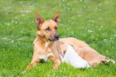 Mixed-breed cute little dog family. — Stock Photo