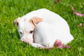 Mixed-breed cute little puppy on grass. — Zdjęcie stockowe