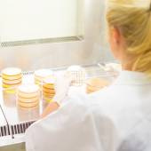 Life science researcher grafting bacteria. — Stock Photo