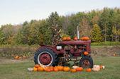 Pumpkins for Halloween — Stock Photo