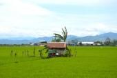 La rizière — Photo
