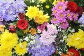 Florals ornament — Stock Photo
