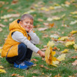 Cute boy with autumn leaves — Stock Photo #56529145