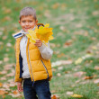 Cute boy with autumn leaves — Stock Photo #56529217