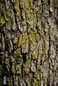 Abstract Wood Texture Bark — Stock Photo