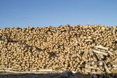 Pricked firewood built in stack of logs on background blue sky — Stock Photo