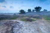 Misty dusk on sand dunes with heather — Stock Photo