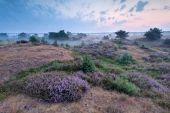 Misty morning on heatherland — Stock Photo
