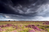 Stormy sky over meadows with heather — Stock Photo