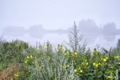 Yellow wildflowers by lake in fog — Stock Photo