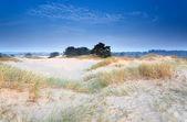 Dunas de arena en el atardecer de mañana — Foto de Stock