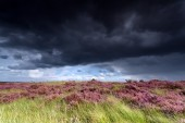 Stormy sky over meadows with heather — Foto de Stock