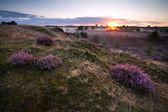 Sunrise over hills with heather — Stock Photo
