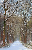 Path in white snow winter forest — Stockfoto