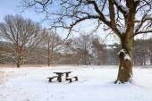 Bench at rest place on snow in winter — Stockfoto