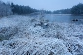 Snow and frost on wild forest lake — Stock Photo