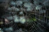 Big spider web covered with drops — Stock Photo