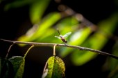 Beautiful dragonfly sitting on branch at forest — Stock Photo