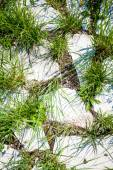 Grass growing through white granite rocks — Stockfoto