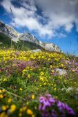 Landscape of flower filed on the piedmont of Lovcen mountain — Stock Photo