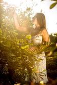 Toned photo of beautiful woman picking apples — Stock Photo