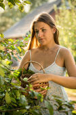 Young woman picking apples at garden at sunny day — Stockfoto