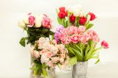 Different fresh cut flowers in vases against white background — Stock Photo