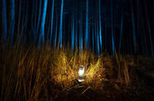 Dark forest at night lit by old gas lamp — Stock Photo