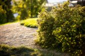 Photo of green bushes lit by evening sun at beautiful park — Stok fotoğraf