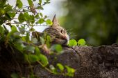Милая кошка, спящая на высокой каменной стене, переросшей с плющом — Стоковое фото