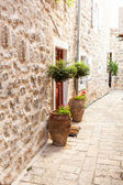 Two trees in pots growing on sides of door at stone wall — Stock Photo