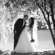 Monochrome photo of beautiful bride and groom kissing under big  — Stock Photo #62571005