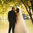 Silhouette photo of bride and groom kissing at river under big t — Stock Photo #62571087