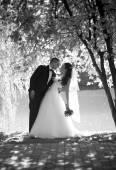 Foto monocromo de la hermosa novia y el novio besándose bajo grande — Foto de Stock